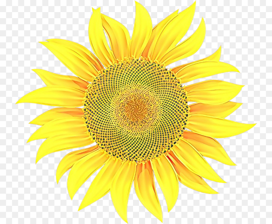 Descarga gratuita de Girasol, Amarillo, Flor imágenes PNG