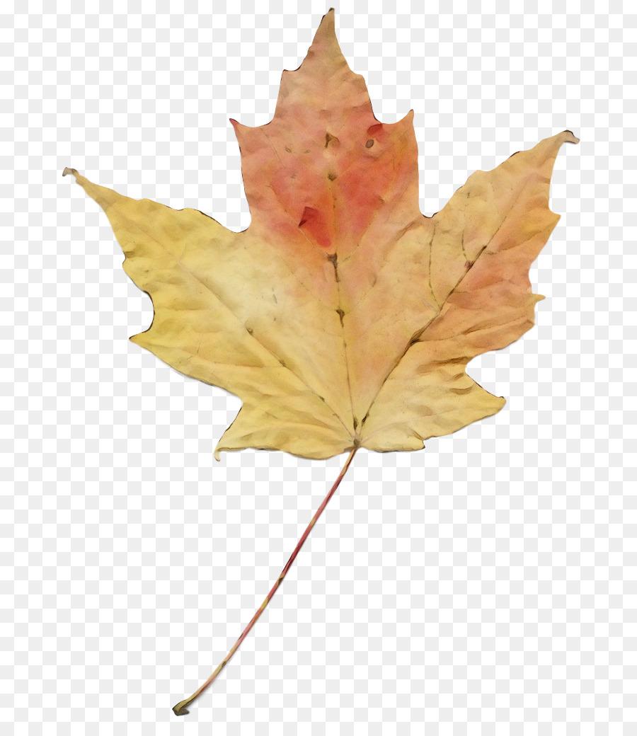 Descarga gratuita de Hoja, La Hoja De Arce, árbol imágenes PNG