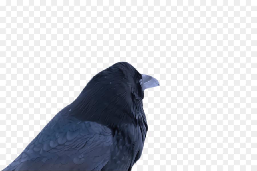 Descarga gratuita de Aves, Azul, Pico Imágen de Png
