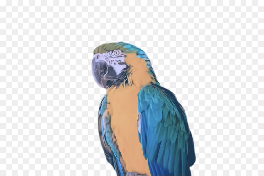 Descarga gratuita de Aves, Guacamayo, Pico Imágen de Png