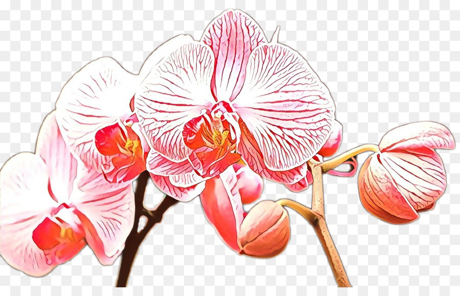 Descarga gratuita de Flor, La Floración De La Planta, La Polilla De La Orquídea Imágen de Png