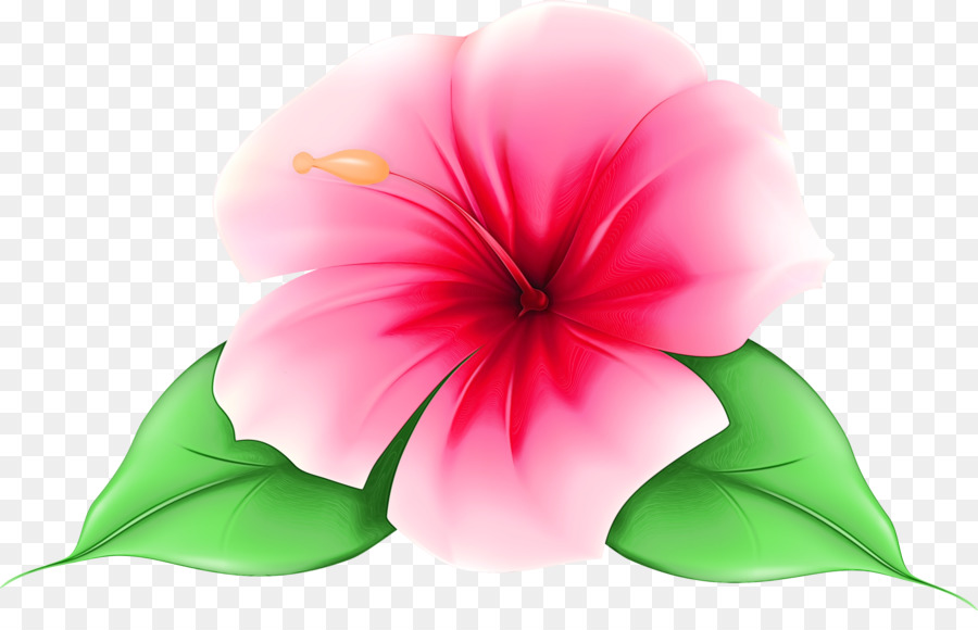 Descarga gratuita de Pétalo, Flor, Hibiscus Hawaiian Imágen de Png