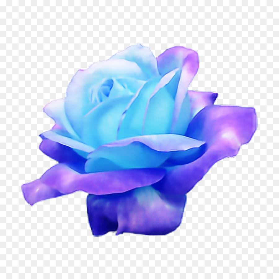 Descarga gratuita de Azul, Rosa, Rosa Azul Imágen de Png