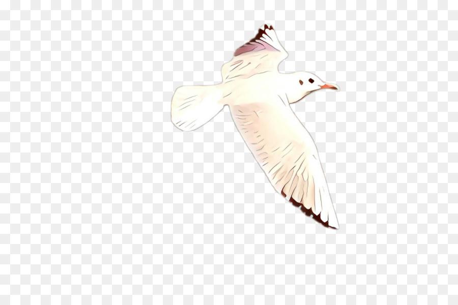 Descarga gratuita de Ala, Aves, Pico Imágen de Png