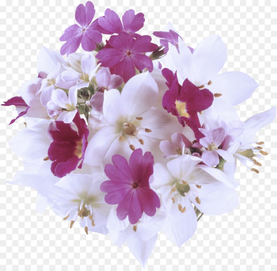 Descarga gratuita de La Floración De La Planta, Flor, Pétalo Imágen de Png