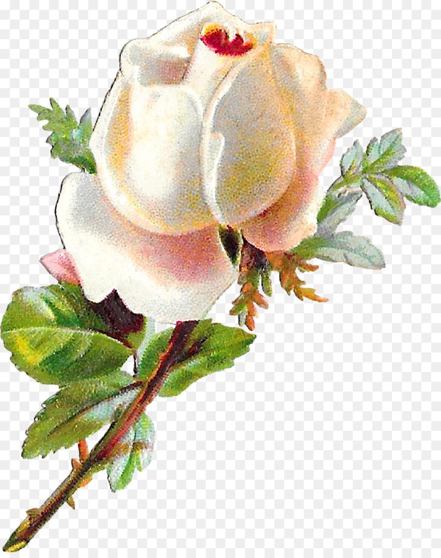 Descarga gratuita de Flor, Rosa, Pétalo Imágen de Png