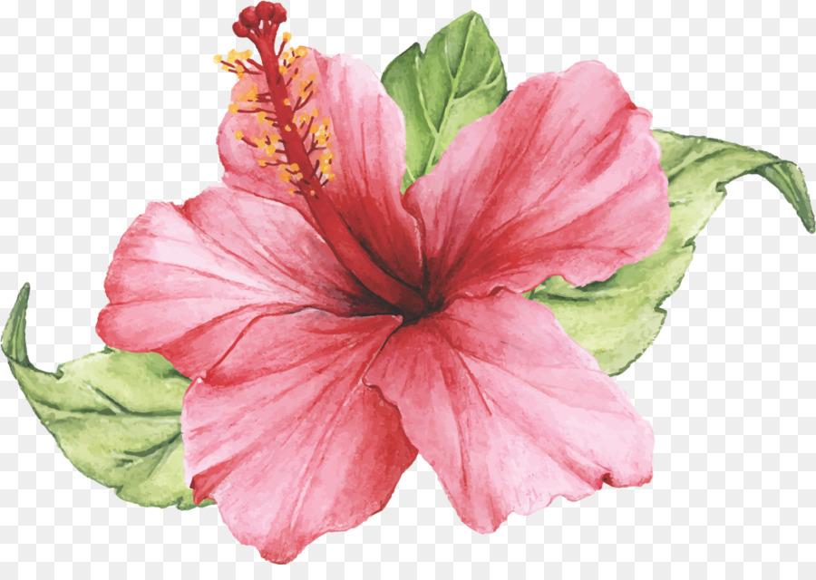 Descarga gratuita de Flor, Pétalo, Rosa Imágen de Png