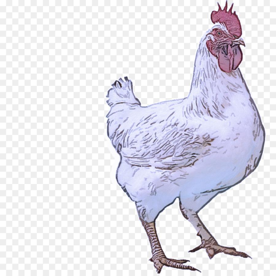 Descarga gratuita de Aves, Pollo, Gallo Imágen de Png