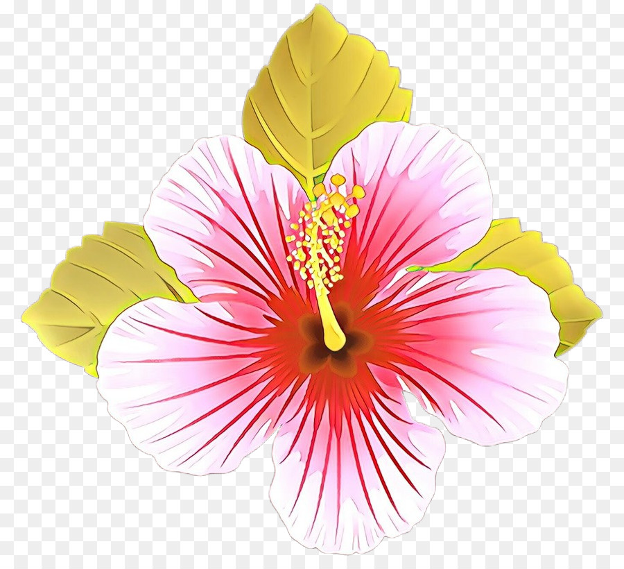 Descarga gratuita de Flor, Pétalo, Hibiscus Hawaiian Imágen de Png