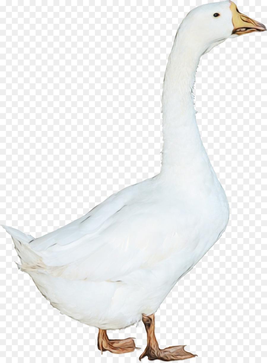 Descarga gratuita de Aves, El Agua De Las Aves, Ganso Imágen de Png