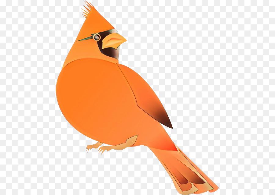 Descarga gratuita de Aves, Naranja, Pico imágenes PNG