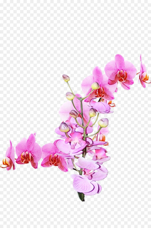 Descarga gratuita de Flor, La Polilla De La Orquídea, Rosa Imágen de Png