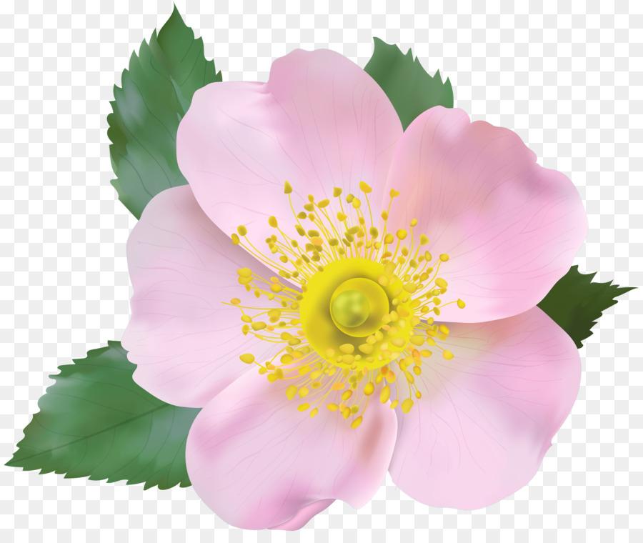 Descarga gratuita de Flor, Pétalo, Espinosa De La Rosa Imágen de Png