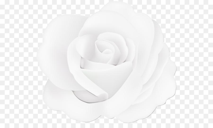 Descarga gratuita de Blanco, Pétalo, Rosa imágenes PNG