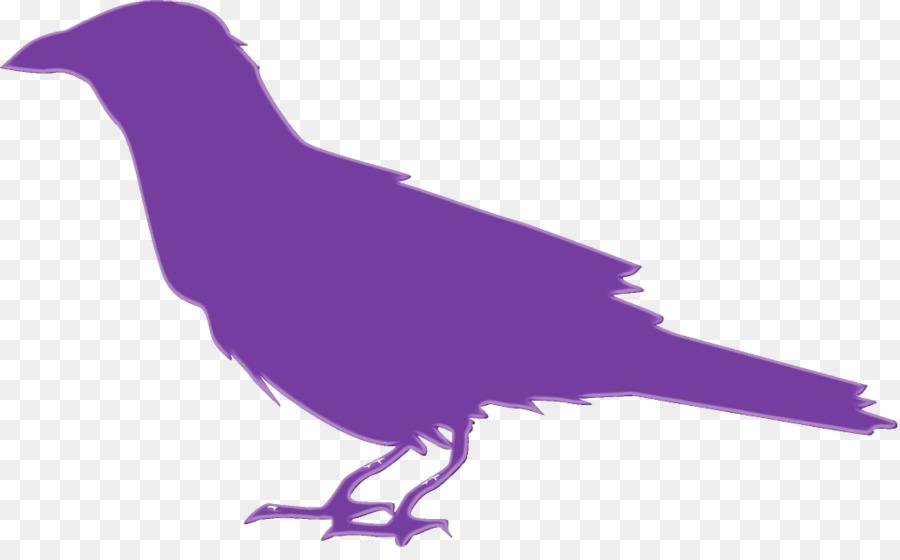 Descarga gratuita de Aves, Pico, Pluma Imágen de Png