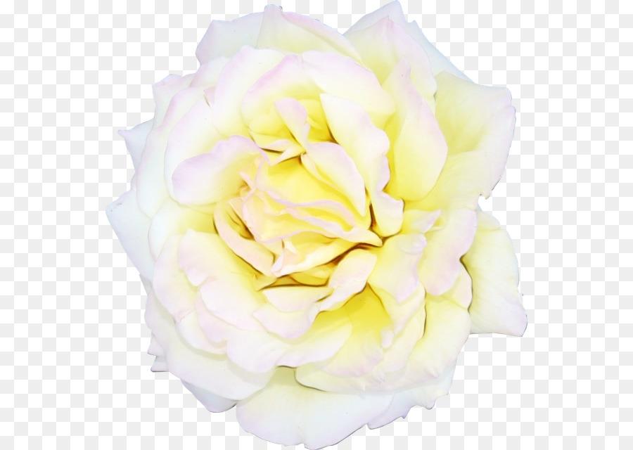 Descarga gratuita de Flor, Blanco, Pétalo Imágen de Png