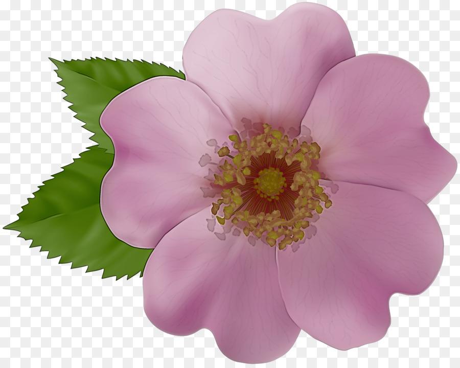 Descarga gratuita de Flor, Pétalo, Rosa Rubiginosa Imágen de Png
