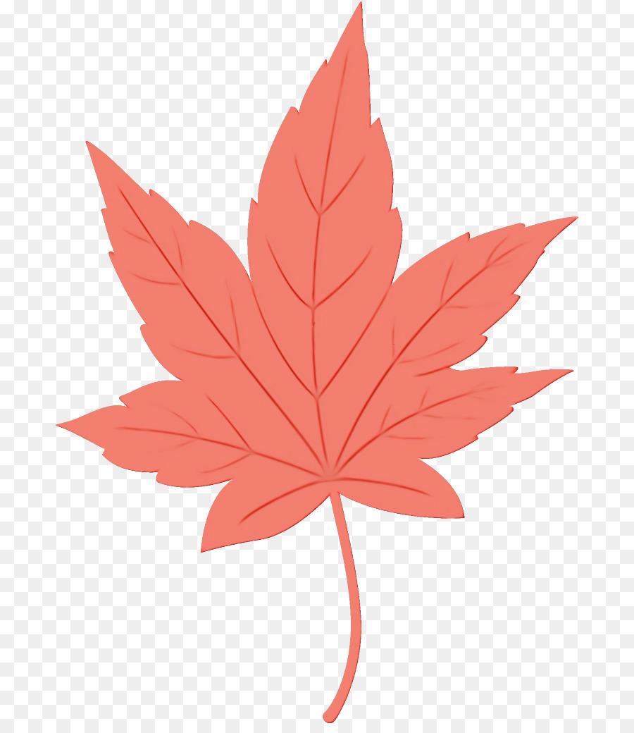 Descarga gratuita de Hoja, La Hoja De Arce, árbol Imágen de Png