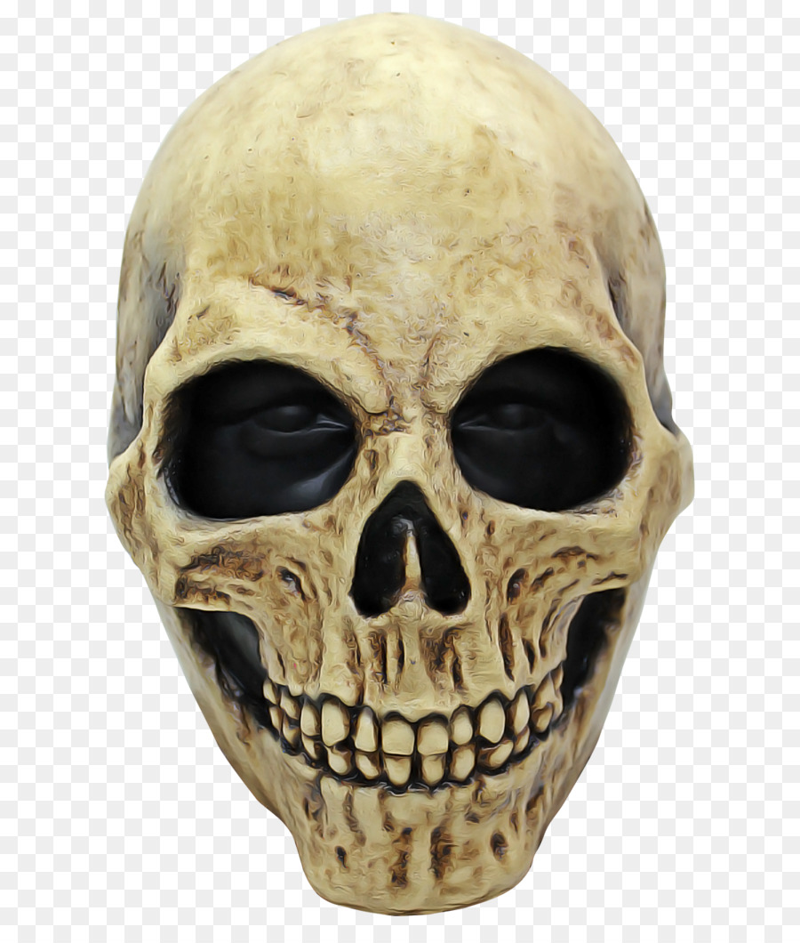Descarga gratuita de La Cara, La Cabeza, Esqueleto Imágen de Png