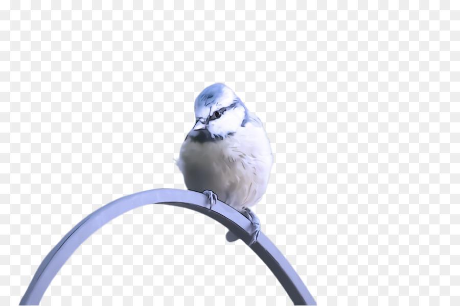 Descarga gratuita de Aves, Pico, Azul Imágen de Png