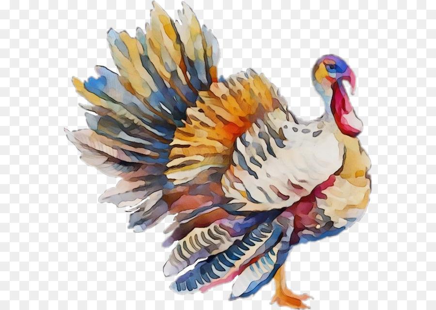 Descarga gratuita de Aves, Turquía, Pluma Imágen de Png