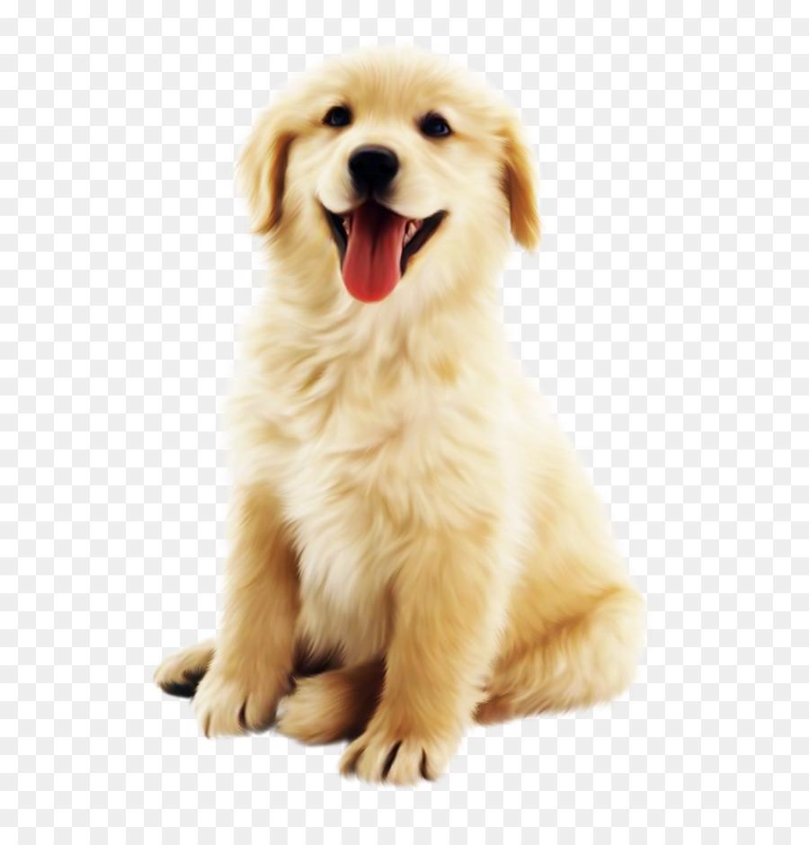 Descarga gratuita de Perro, Golden Retriever, Cachorro Imágen de Png