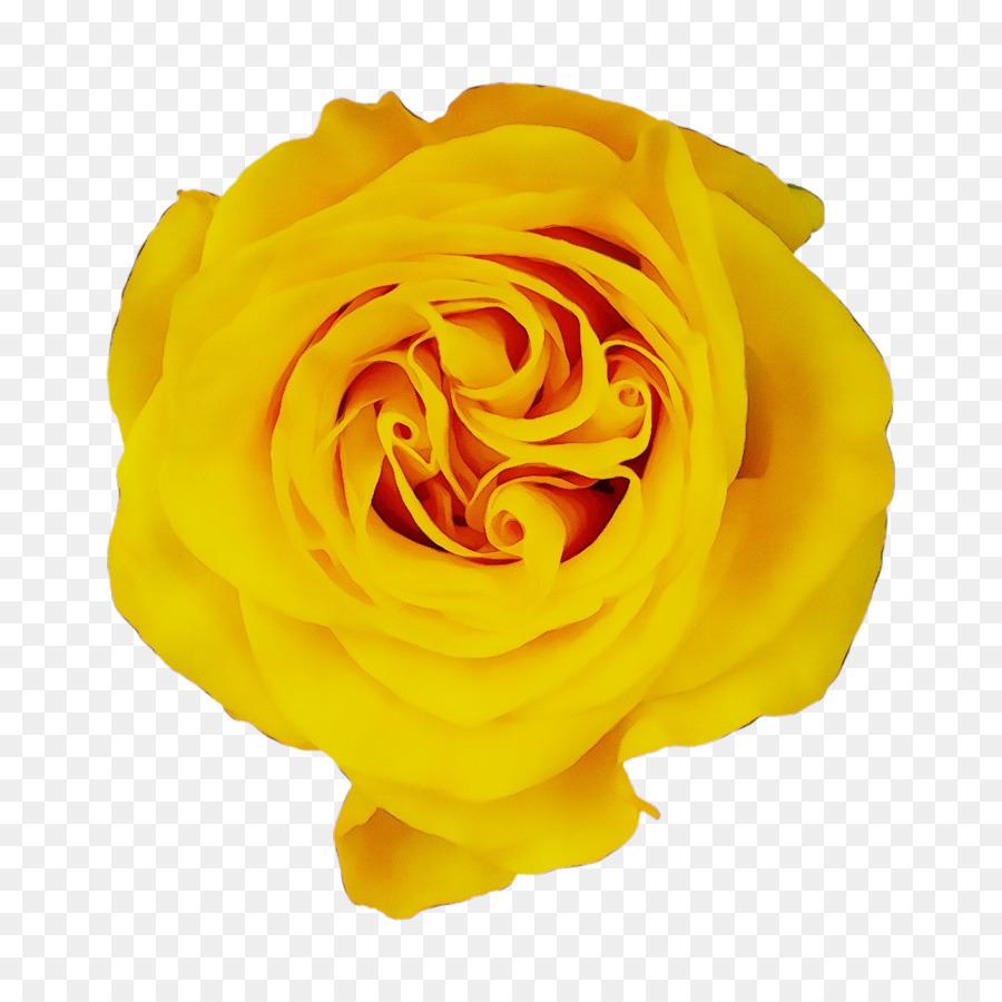 Descarga gratuita de Rosa, Las Rosas De Jardín, Amarillo Imágen de Png