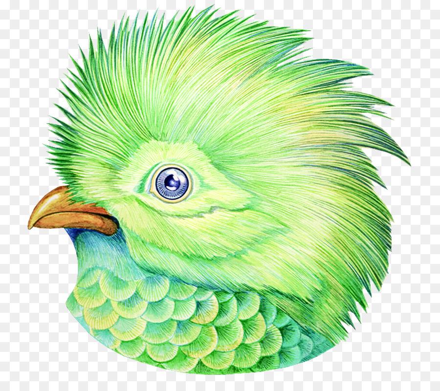 Descarga gratuita de Verde, Aves, Pico Imágen de Png