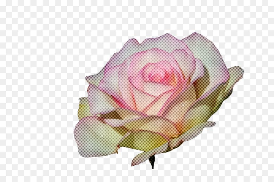 Descarga gratuita de Rosa, Blanco, Las Rosas De Jardín Imágen de Png
