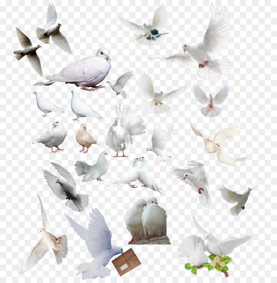 Descarga gratuita de Aves, Las Palomas Y Las Palomas, Gaviota Imágen de Png