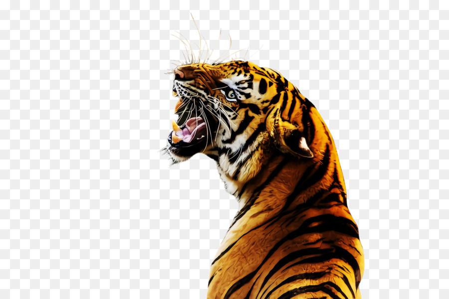 Descarga gratuita de Tigre, Tigre De Bengala, Siberiano Imágen de Png