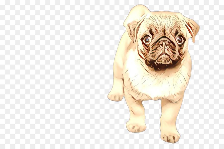 Descarga gratuita de Perro, Pug, Hocico imágenes PNG