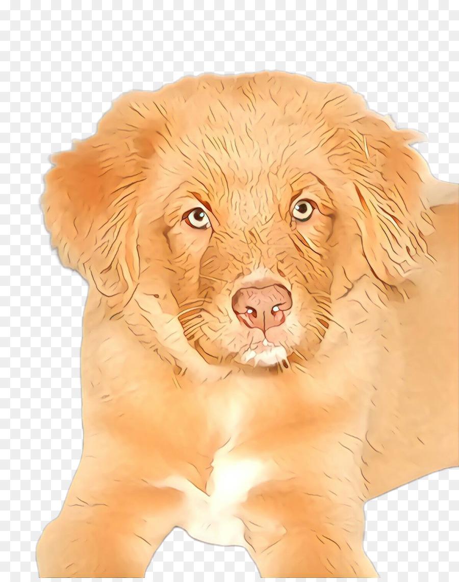 Descarga gratuita de Perro, Nova Scotia Duck Peaje Retriever, Cachorro imágenes PNG