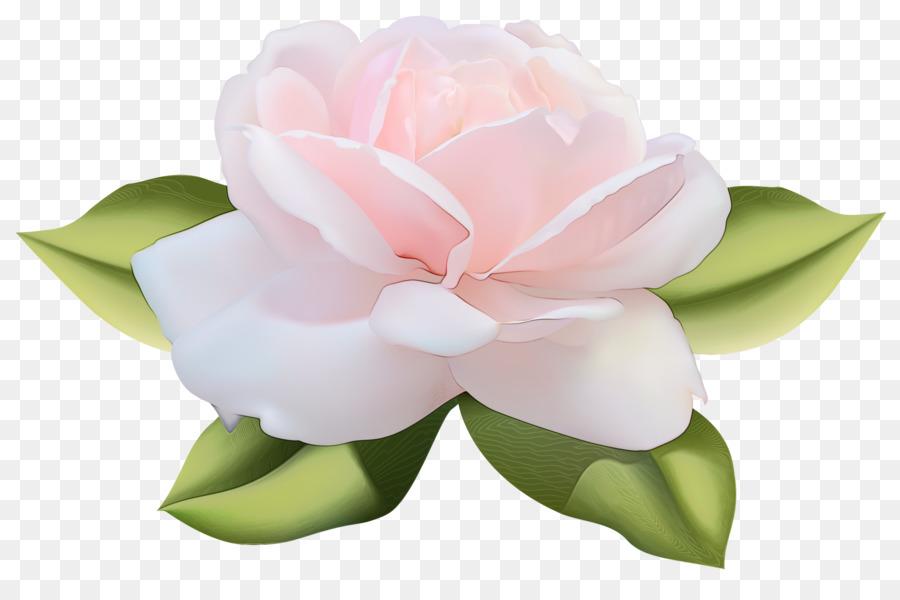 Descarga gratuita de Rosa, Blanco, Pétalo Imágen de Png