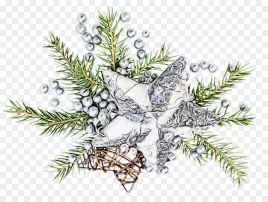 Descarga gratuita de Rama, Jack Pine, árbol Imágen de Png