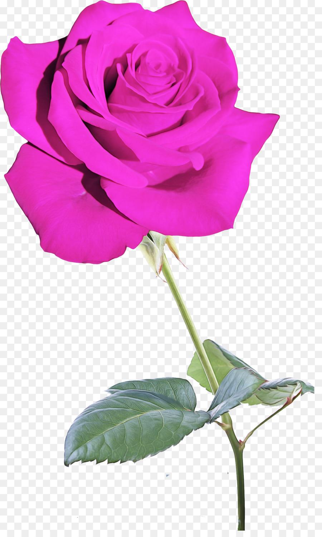 Descarga gratuita de Flor, Las Rosas De Jardín, Rosa Imágen de Png
