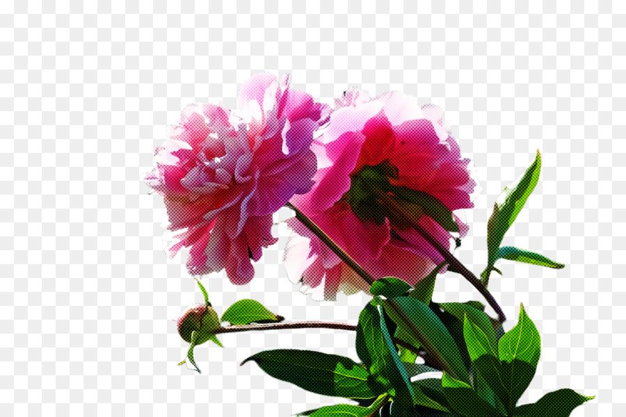Descarga gratuita de Flor, Planta, Pétalo imágenes PNG