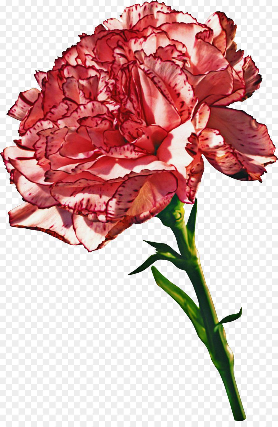 Descarga gratuita de Flor, Planta, Rojo imágenes PNG