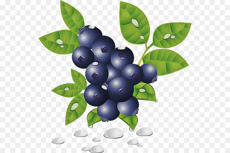 Descarga gratuita de Berry, Planta, Arándano Imágen de Png