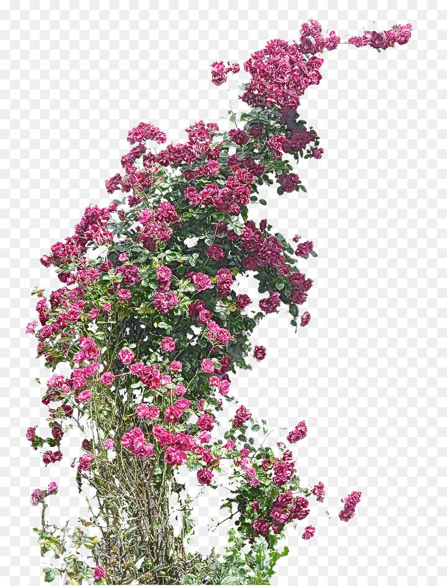 Descarga gratuita de Flor, Planta, Rosa imágenes PNG