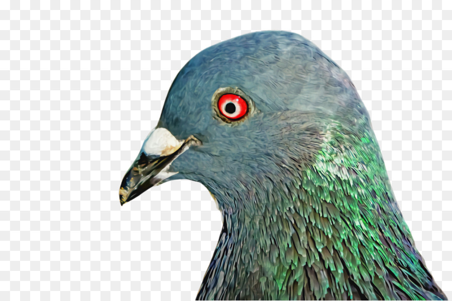Descarga gratuita de Aves, Pico, Las Palomas Y Las Palomas Imágen de Png