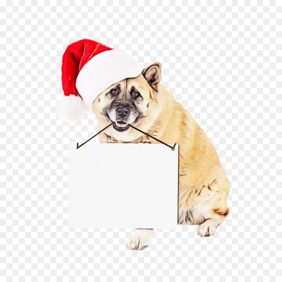 Descarga gratuita de Perro, Bulldog, Pug imágenes PNG