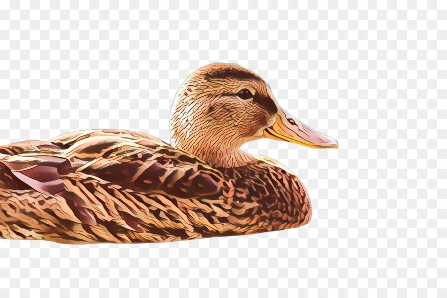 Descarga gratuita de Aves, Pato, El Agua De Las Aves imágenes PNG