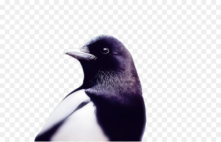 Descarga gratuita de Aves, Pico, Pingüino Imágen de Png