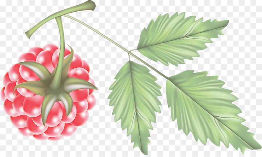 Descarga gratuita de Hoja, Flor, Planta Imágen de Png