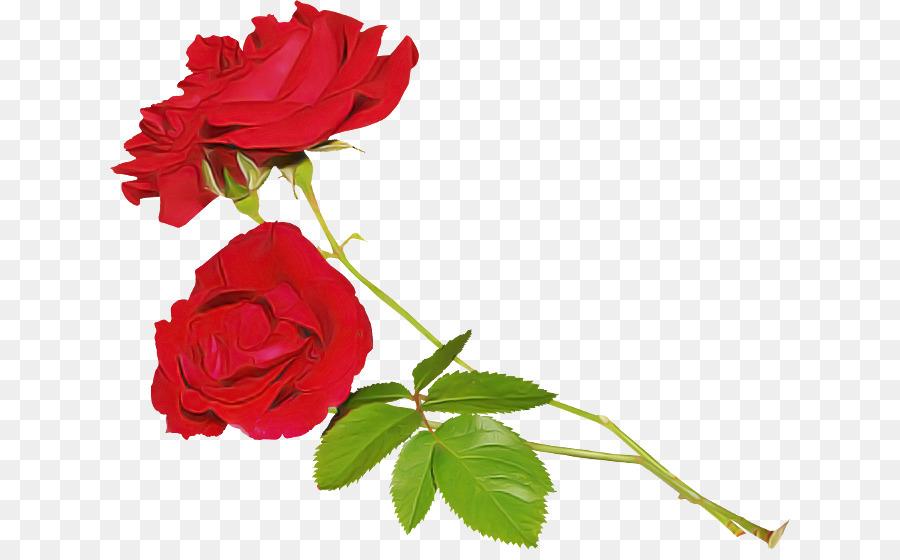 Descarga gratuita de Flor, Rojo, Rosa imágenes PNG