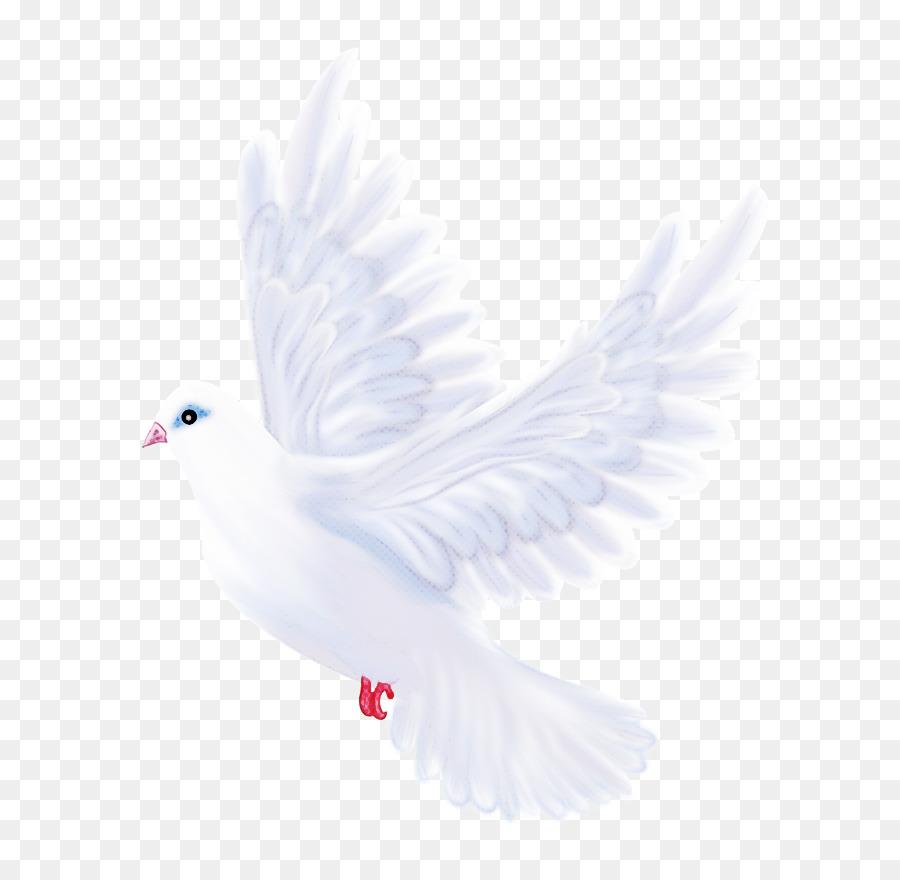 Descarga gratuita de Blanco, Las Palomas Y Las Palomas, Aves Imágen de Png