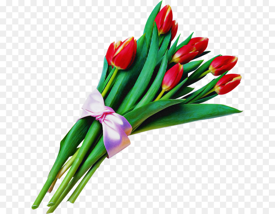 Descarga gratuita de Flor, Tulip, Planta Imágen de Png