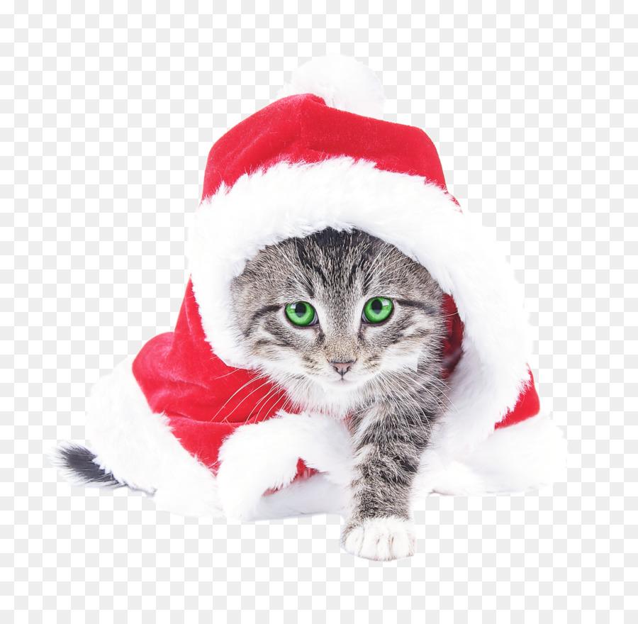 Descarga gratuita de Gato, Santa Claus, Gatito imágenes PNG