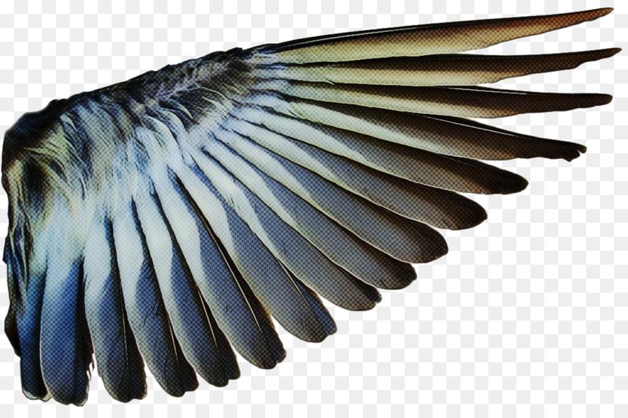 Descarga gratuita de Pluma, Ala, Aves Imágen de Png